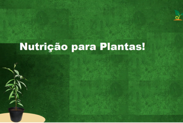 alimento de plantas